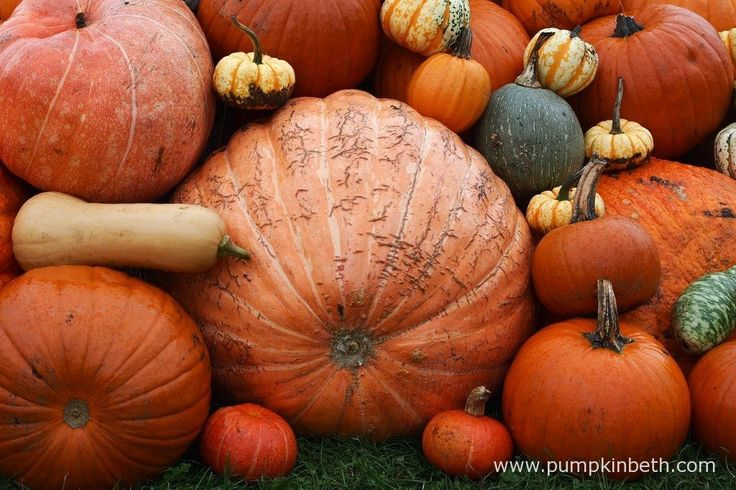Pumpkins (and other vegetables) to sow in May - Pumpkin Beth