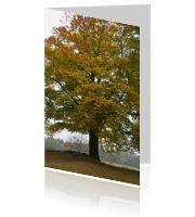 #Condoleance #Kaarten met #bomen en het #bos van www.daglief.nl. U kunt ook #eigenfoto's toevoegen, items weglaten, kleuren aanpassen... We denken graag met u mee. Mailt of belt u ons voor persoonlijk advies via info@daglief.nl of 010 511 33 40 (tijdens kantooruren). #kwaliteit #duuraam #nietduur #snellelevering #weekenddruk #zondagdruk