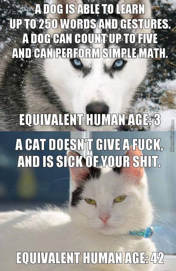 15 Cat Vs Dog Memes To Show Who S The Boss Funny Dog Memes Dog
