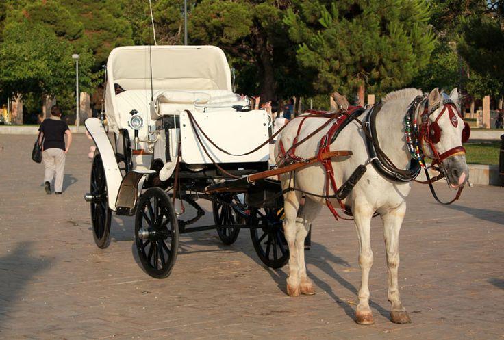 http://visitthessalonikigreece.com/wp-content/uploads/2015/01/horse.jpg