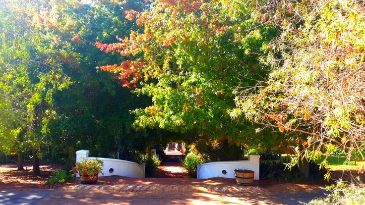 Entrance to the lush #hartenberg gardens #winetasting #southafrica #winelands