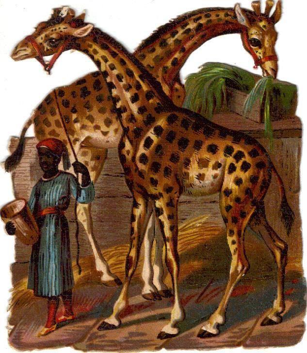Victorian Die Cut Scrap 2 Giraffes c1880