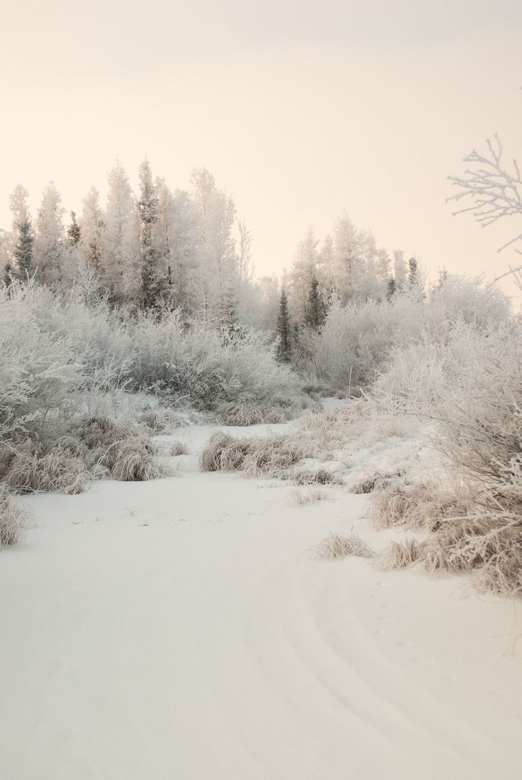 jeanpolfus | A frosted streambed just behind our office in Tulit'a, Northwest Territories, Canada.