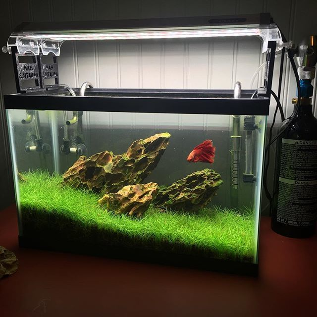 11 best planted betta tanks images on pinterest for Well water for fish tank
