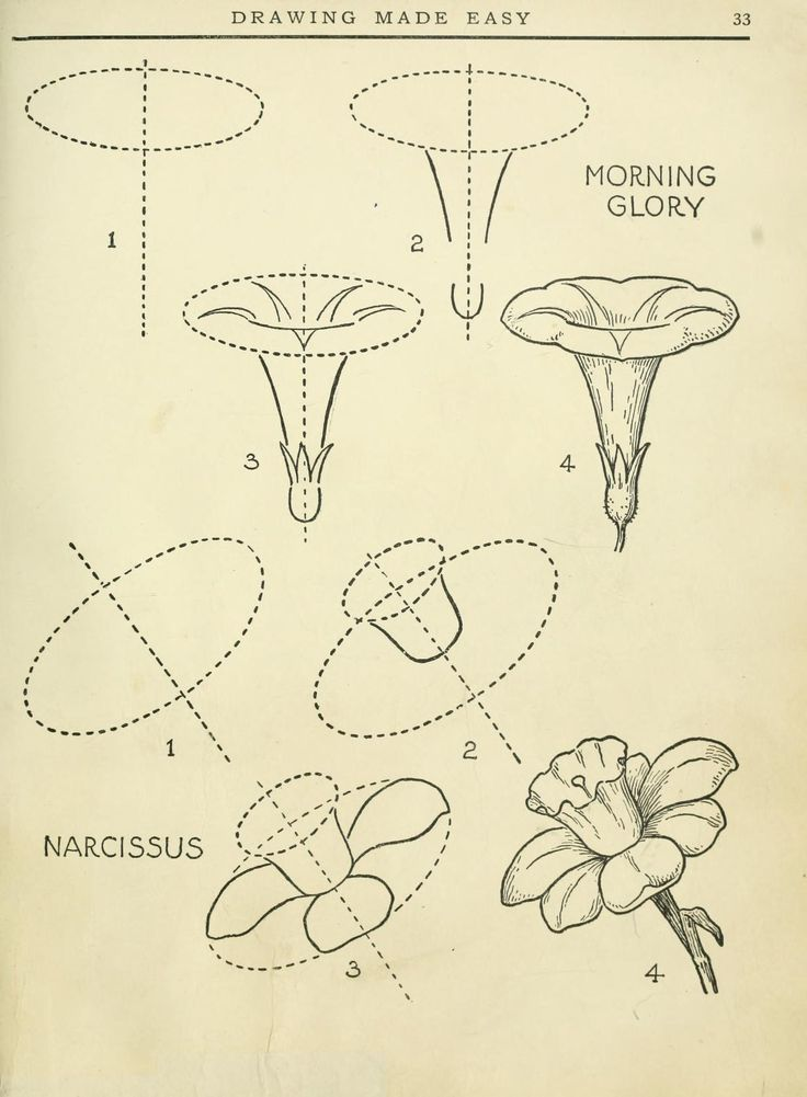 190 best drawing tutorials flowers and plants images on for Simple flower drawing tutorial