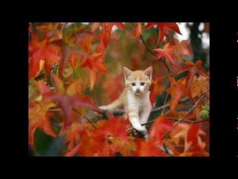Filmpje herfst
