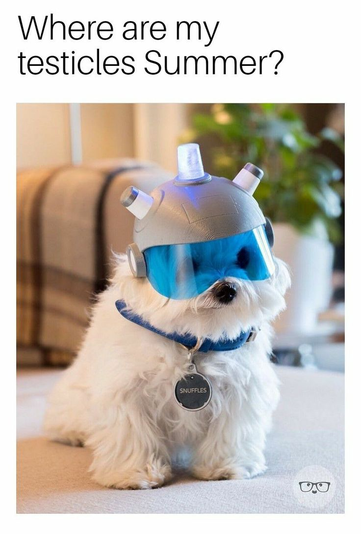 I need that for my dog for next year's Halloween!