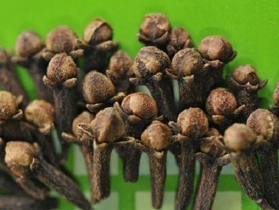 10 benefícios do cravo-da-índia (com receita do óleo e do extrato de cravo)…
