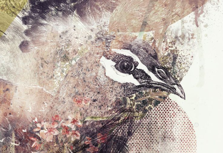 bird, illustration, poster, peacock, watercolor, collage, flowers, #ElementEdenArtSearch http://www.behance.net/gallery/The-bird-project/6483031
