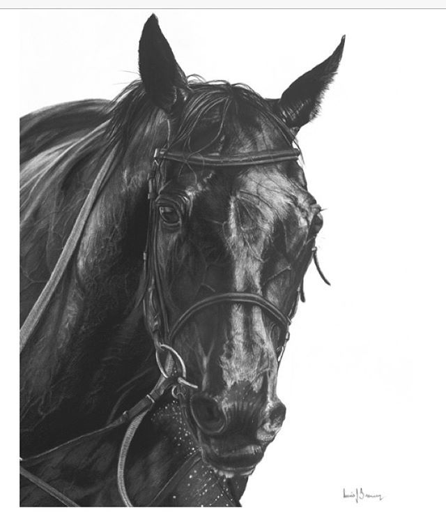 Winners Circle. This charcoal drawing will be available at Manyung Gallery Mt Eliza Victoria Australia during the Spring Racing Carnival #horse #horses #charcoal #drawing #thoroughbred #horseracing #Melbournecup #art #artist #gallery #b&w #blackandwhite #equestrian #Springracingcarnival
