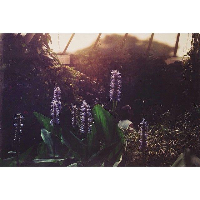 """Late afternoons spent wandering in the winter gardens. #blooms #chasinglight#garden #wintergarden #plants #green#auckland #mustdonz #newzealand"