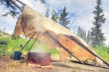 Moose Hide Tanning the Old Fashioned Way, Canada - tan rabbit hide for dog play
