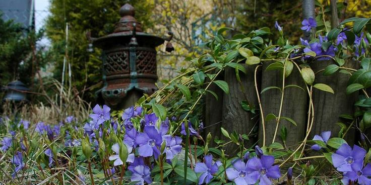 Bunndekkere gir deg fin hage året rundt.