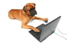 Cyber Dog Training - helping you where you are. Fun and effective. :)