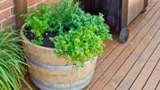 How to make a herb garden (that's portable)