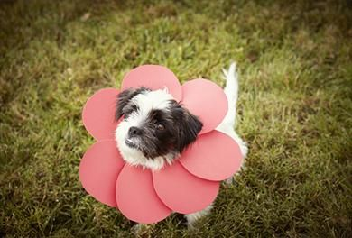 21 best petables images on pinterest animal clinic cute things get everyone in your family into the holiday spirit this halloween for more fun diy solutioingenieria Images