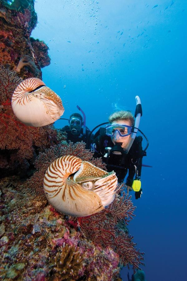 To do: Palau, Micronesia (a nautilus spotting would be a HUGE plus!)