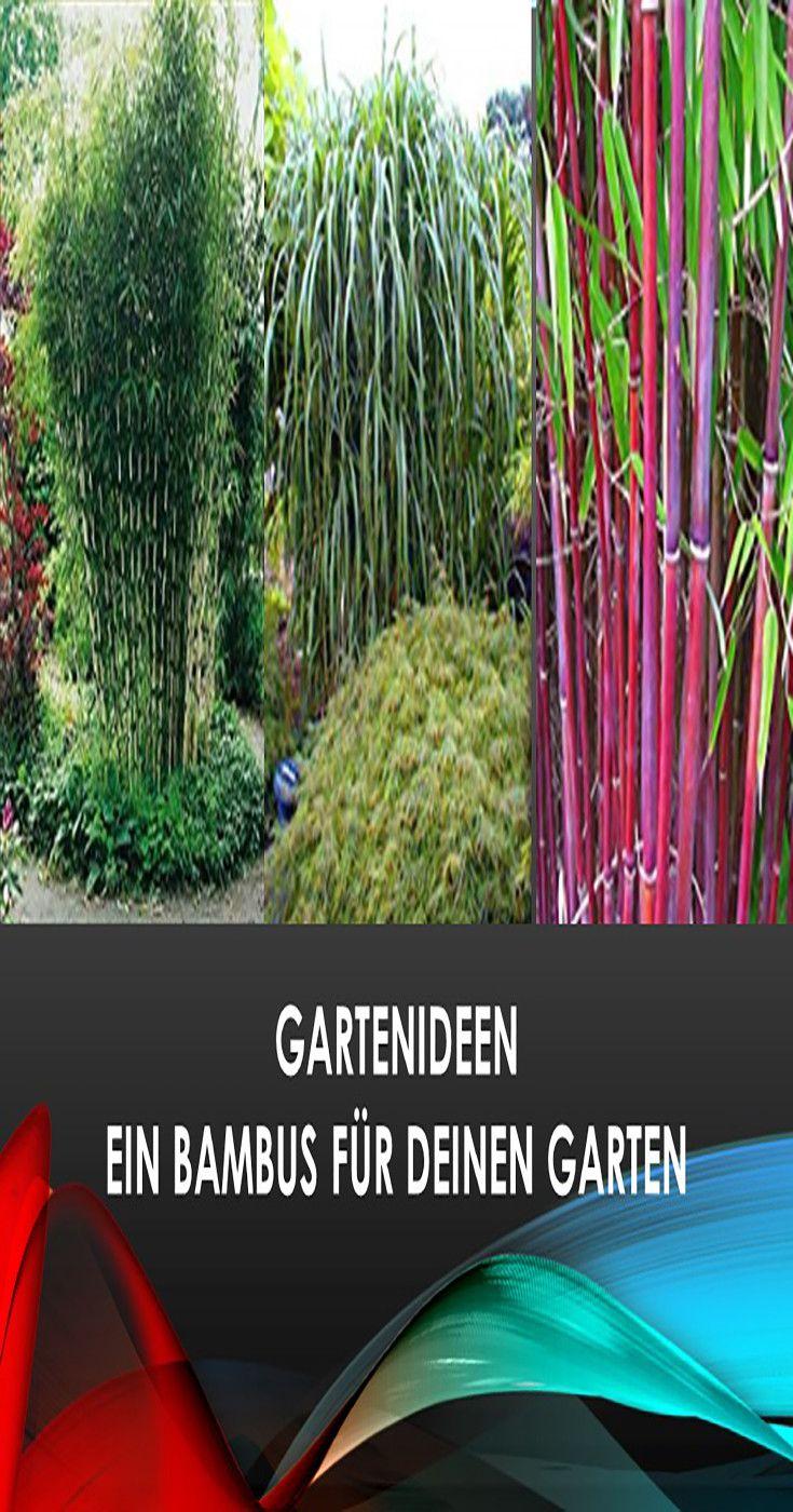 Bambuspflanzen Bestsellerliste Zur Gartengestaltung Gartenideen Bambuspflanzen Bambus Bambus Pflanzen Garten Pflanzen