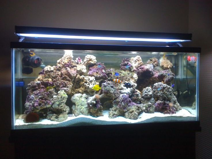 Need 55 gallon reef setup saltwater pinterest 55 gallon for 55 gallon aquarium decoration ideas