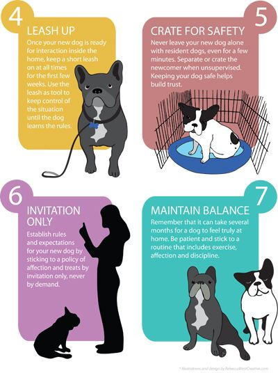 French Bulldog Rescue Network :: Guide to Introducing a New Dog