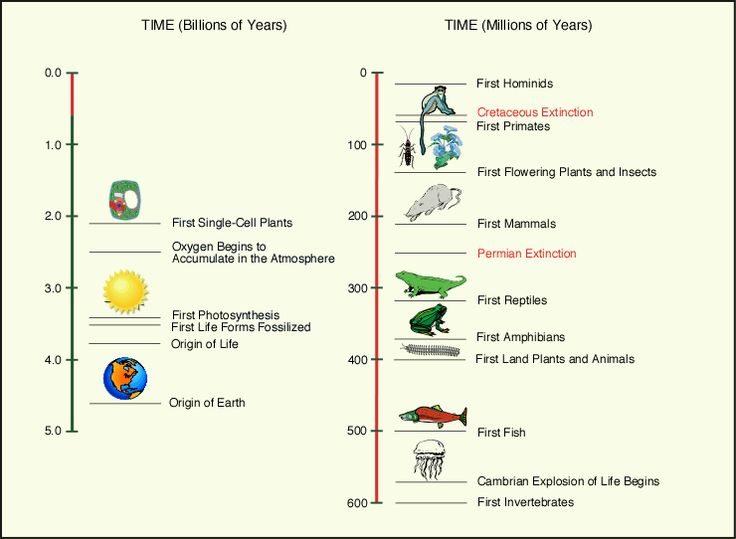 how have castles evolve over time essay Read this full essay on medieval castles medieval castles  1960 words - 8  pages how have castles evolved over time  castles of medieval times essay.