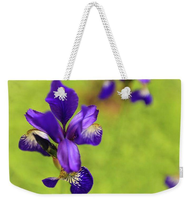 "New artwork for sale! - ""Dancing irises"" - https://fineartamerica.com/…/dancing-irises-anna-matveeva.h… … @fineartamerica"