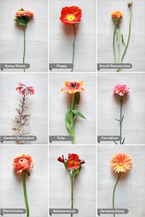 Orange wedding flowers with names