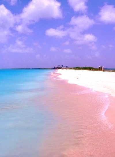 Image result for bermuda beaches pink sand
