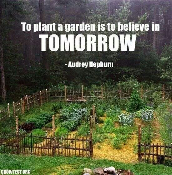 Garden Quotes And Life Lessons Pinterest