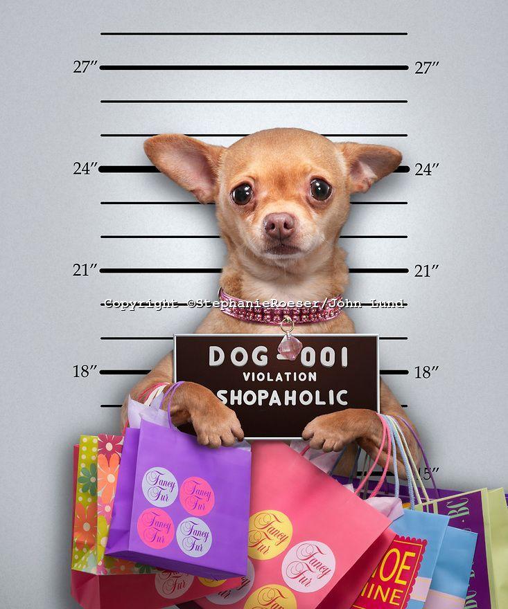 Funny Chihuahua Mug Shot | john lund Yaziq It((( ))))
