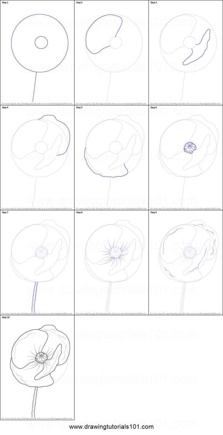 the 25 best how to draw poppies ideas on pinterest