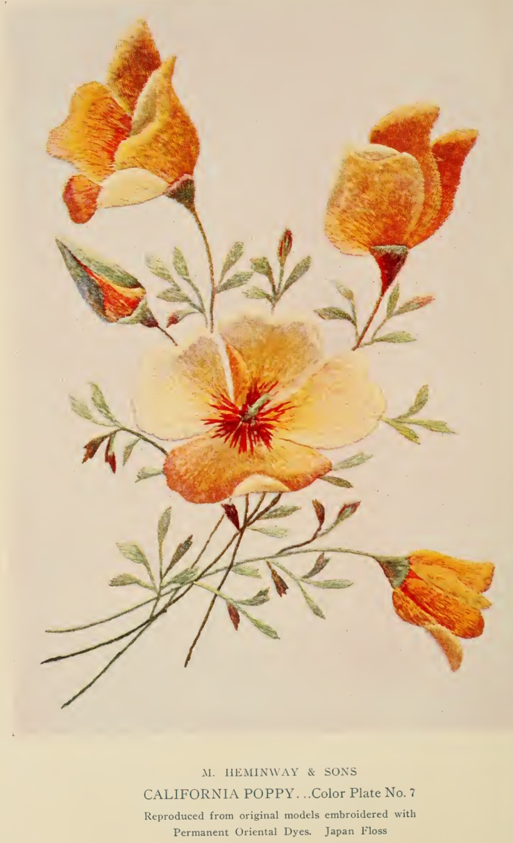 """California Poppy Embroidery from """"A Treatise on Embroidery"""" published in 1907."""