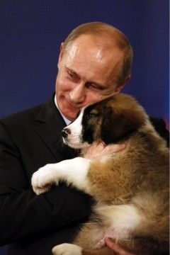 Bulgarian karakachan- might be the cutest puppy ever. Even melts Putin's heart.