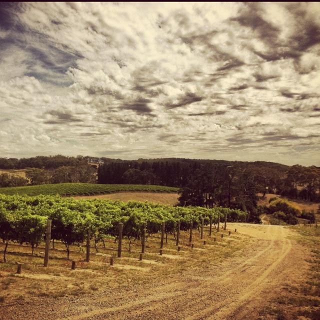 Mike Press Vineyards, Adelaide Hills