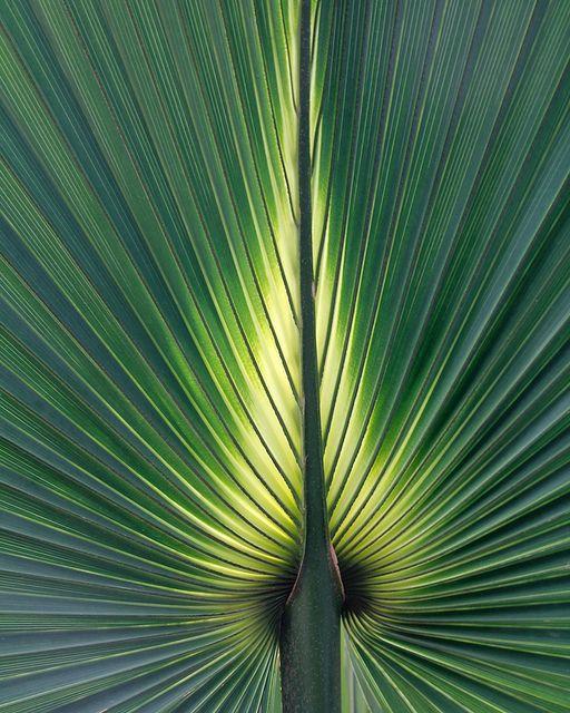 Green fan (by @Doug88888, via Flickr)