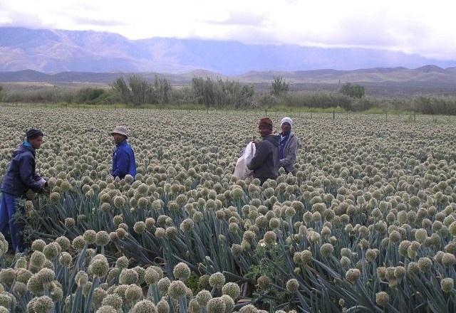 Multi Properties – Klein Karoo seed producing farm