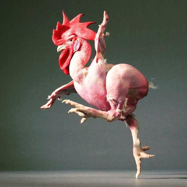 Che pollo....