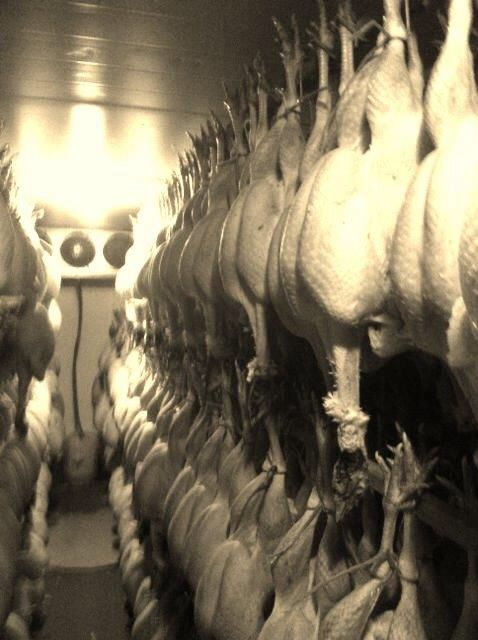 Long legged turkeys - that what they are called when they are hung after dry plucking, with their innards still inside. This improves flavour and keeping quality. These are produced on a local farm which has supplied us for over 20 Christmas's. Great mature birds which have a layer of fat under the skin, keeping them moist during cooking.