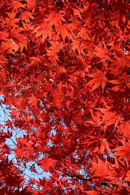 河口湖オルゴールの森美術館 2007年11月18日撮影
