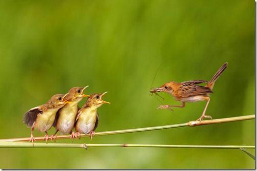 Bird Feeding Children