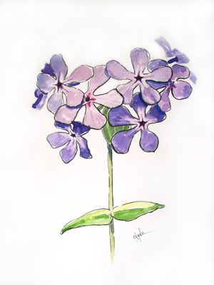 One of my all-time favorite wildflower is the Woodland Phlox. In many photos you usually see this plant as a blue cluster, however the ones I see in the woods are purple not blue. Here is my refere...
