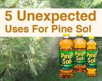 Unexpexted-uses-of-pine-sol: Homemade Fly Spray, Wasp Killer, Keep Pests Away,Pet Pee Deterrent,Stain Remover