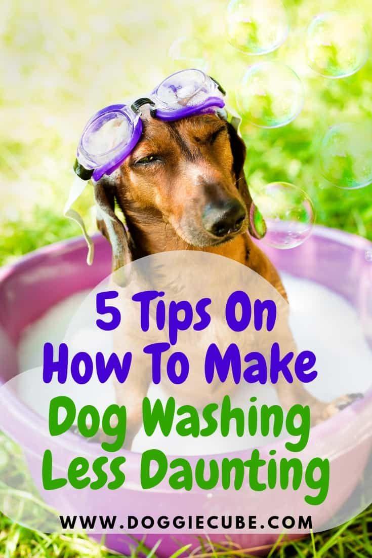 5 Tips On How To Make Dog Washing Less Daunting Diy Dog Wash