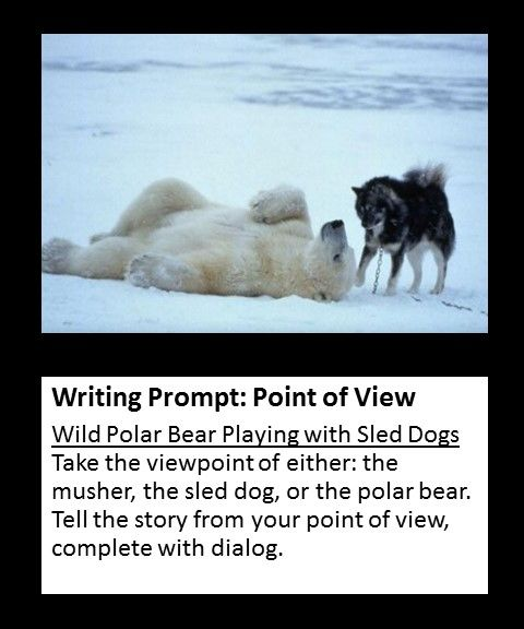 points of view in writing There are three main points of view first person, second person and third person point of view most narratives or stories are told from third person point of view most autobiographies and memoirs are told from first person point of view.