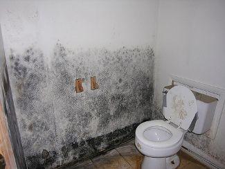 Molds In Bathroom Walls