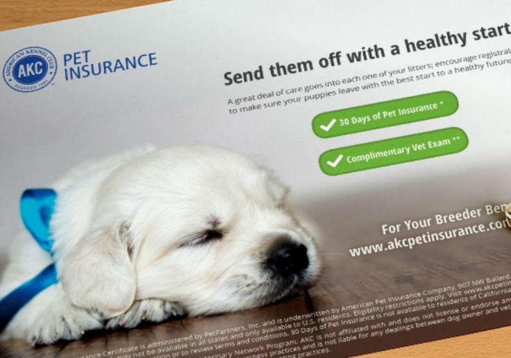 Find out why pet insurance is a must for dog owners and the questions to ask yourself before picking a plan.