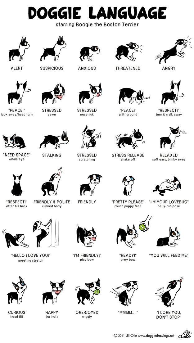 Doggie Language Explained lol