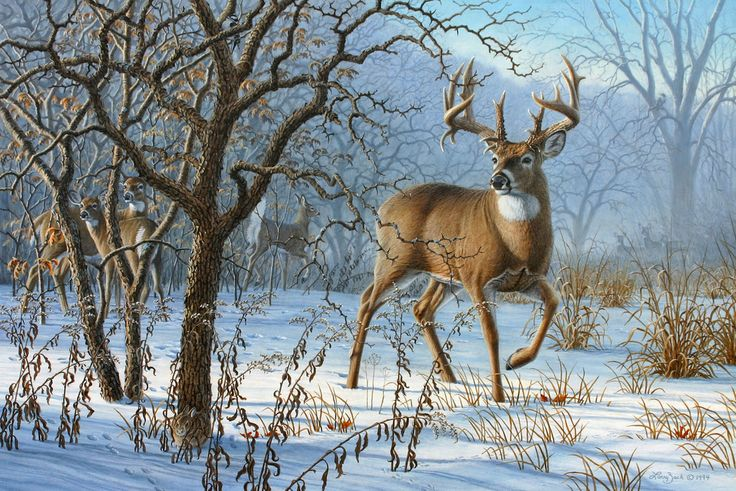 Daybreak-Whitetail Deer Art Prints by Rosemary Millette | Wild Wings