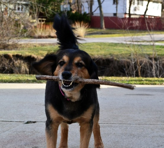 She's a simple kinda puppy, a stick is all she needs.