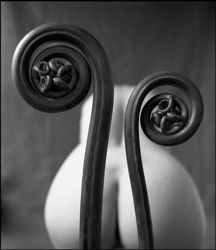 Los discípulos de Helmut Newton emulan al maestro | Fotogalería | | EL PAÍS